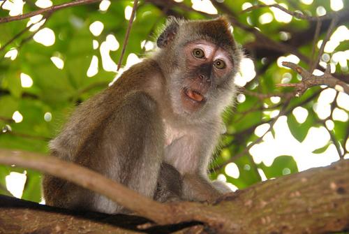 monkey-6307-1384140110.jpg