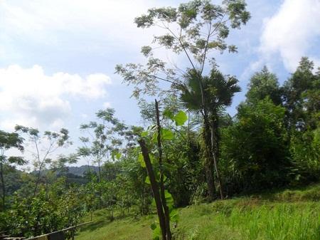 Khu nghĩa địa của bản Bạch Sơn được bao bọc toàn cây cối.