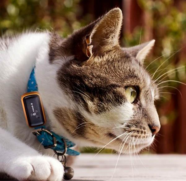 Vòng cổ gắn chức năng định vị GPS sẽ giúp chú mèo cưng nhà bạn ít bị lạc hơn khi ra ngoài chơi.