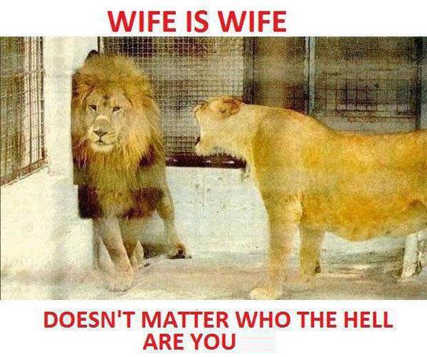 10-wife-1586-1387422945.jpg