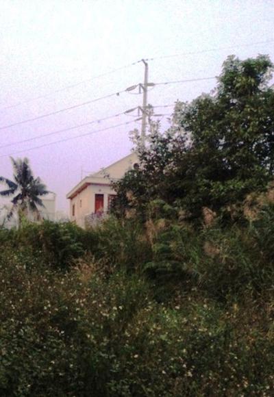 Cây cỏ mọc rập rạp, um tùm ở khoảng đất trống kế bên nhà nạn nhân.