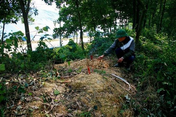 Những nấm mộ trẻ sơ sinh đắp tạm ở bãi rác Nam Sơn.