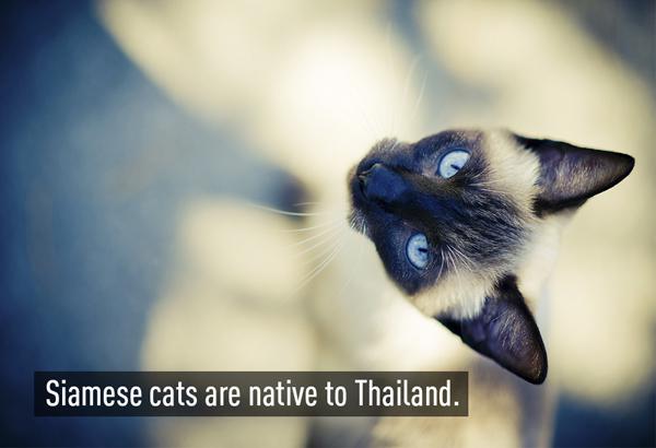 2-Cats-6581-1392895759.jpg