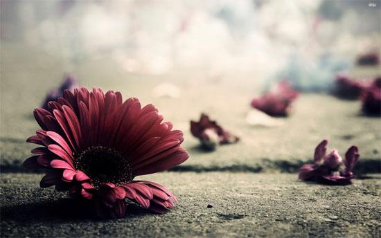 flower2-2947-1392952959.jpg