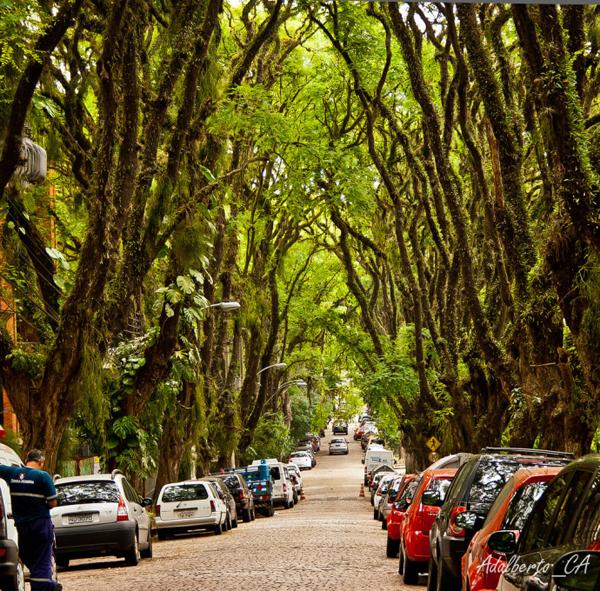 Con đường xanh nhất hành tinh - hình ảnh 4