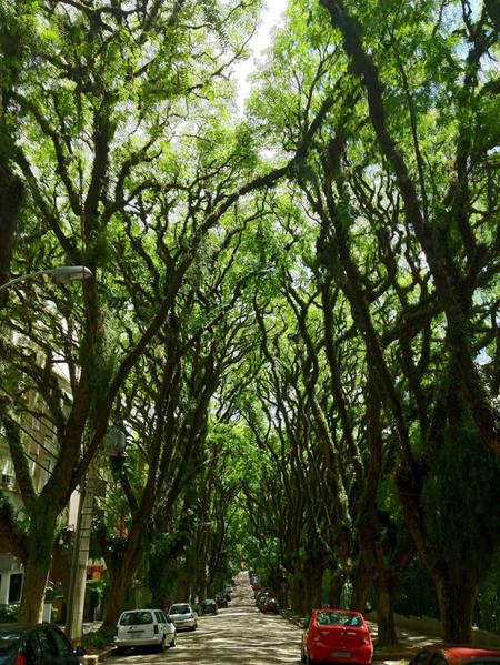 Con đường xanh nhất hành tinh - hình ảnh 3