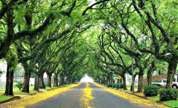 Con đường xanh nhất hành tinh - hình ảnh 7