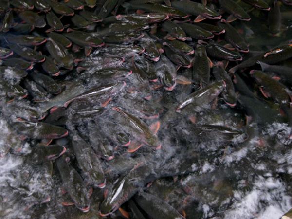 Rong chơi suối cá thần ngày cuối tuần - hình ảnh 1