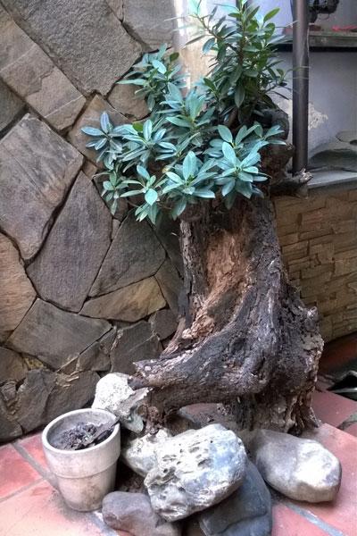 Một góc nhà với cây kiểng do Nguyễn Chánh Tín tận tay chăm sóc hàng ngày như niềm vui nhỏ nhoi của ông.