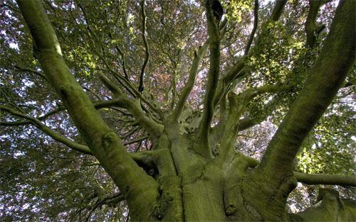 elm-tree1-6128-1395044494.jpg