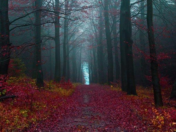 Black-Forest-9785-1395726546.jpg