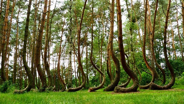 Crooked-Forest-2533-1395726545.jpg