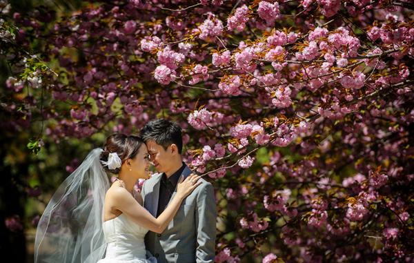 Mùa hoa anh đào Nhật Bản trong những bức hình cưới tuyệt đẹp