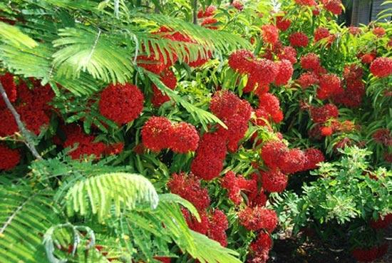 Hawaii-6551-1396408386.jpg
