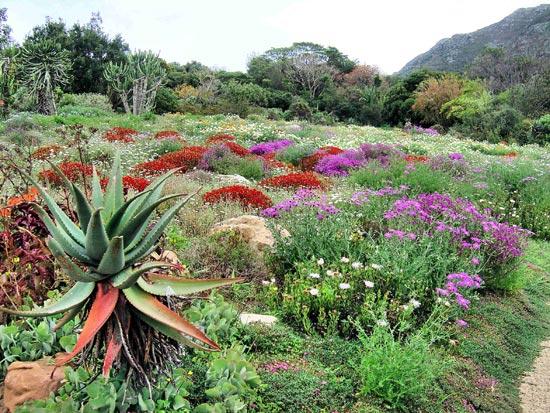 KirstenboschGa-9125-1396408386.jpg
