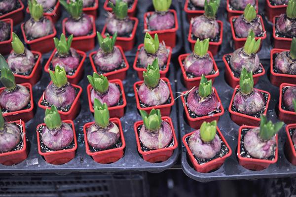 Flower-Market-09.jpg