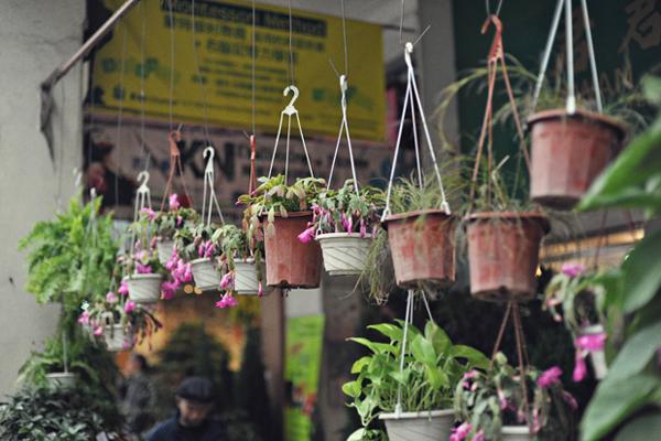 Flower-Market-13.jpg
