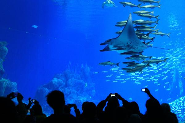 Đây là công viên hải dương học lớn nhất thế giới, rộng trên 132ha với nhiều loại cá quý hiếm, đặc biệt nhất là 10 con cá mập, cá heo đốm nhiệt đới và cá voi trắng Trung Quốc.