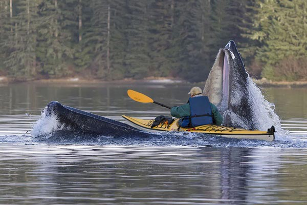 kayak-in-mouth-of-whale-5551-1397640193.