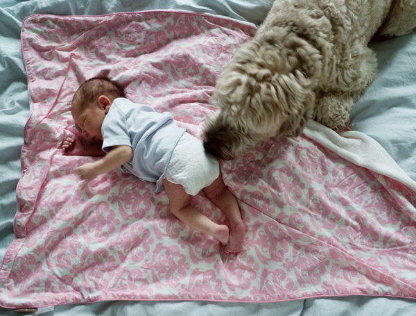 Ngay cả chú chó Geogre của chúng tôi cũng không mấy hứng thú với việc có LouLou, chỉ trừ khi con bé đang được cho ăn.
