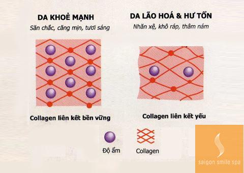 Anh_1_-_tang_collagen.jpg