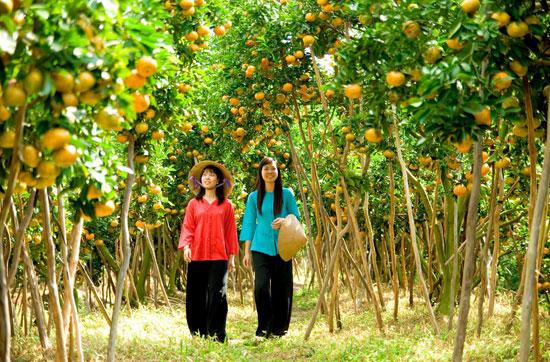 Những khu miệt vườn toàn trái chín còn hơn là tiên cảnh với những người phàm ăn. Ảnh: vietcam.