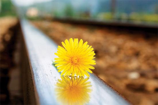 flower-1627-1401961601.jpg