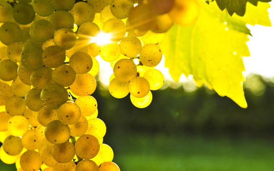grapes-8397-1402543133.jpg
