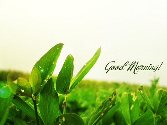 morning-7280-1402735778.jpg