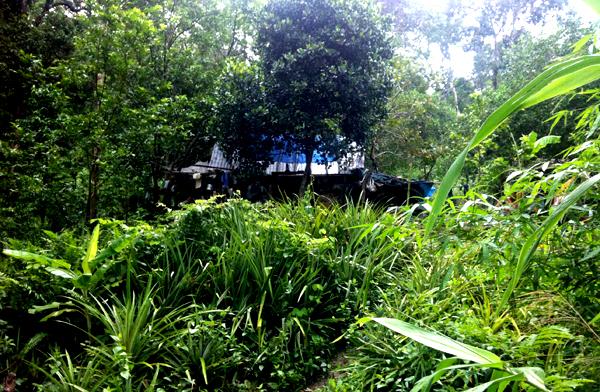 di rung 1 9384 1403266902 Gia đình người rừng ở Bình Thuận