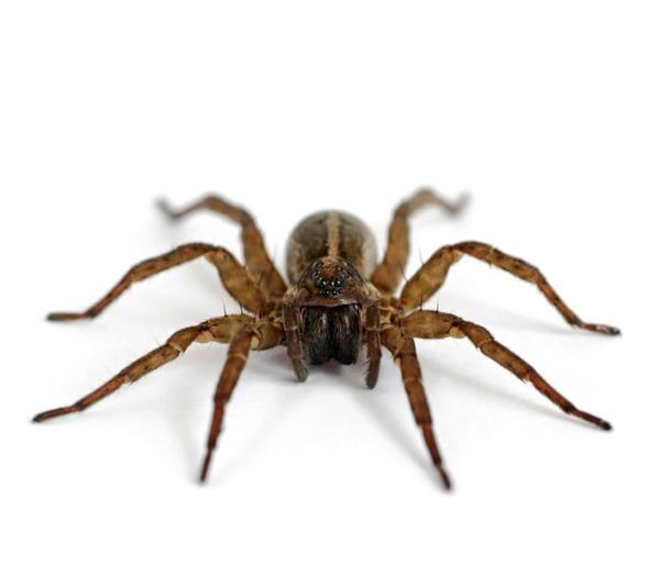 spider-9398-1404117576.jpg