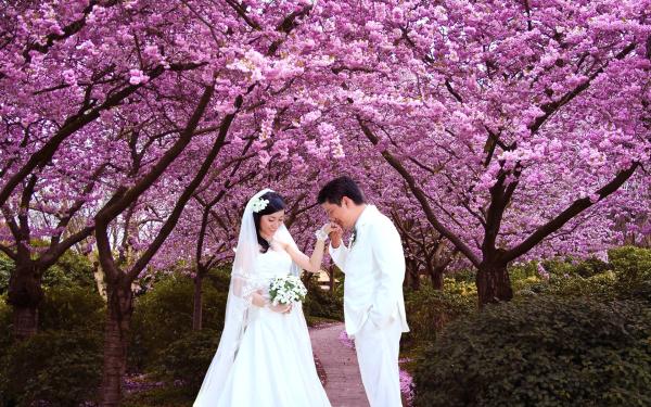 cherry-blossom-1404199895-1267-140446412