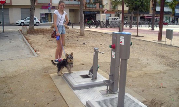 dog-9701-1405332309.jpg