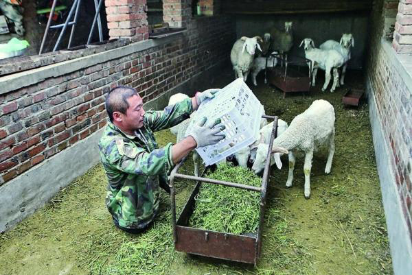 Wang Xiaobing feeds his sheep. He is on the path toward wealth, and is known as the legless tough guy by the local people.