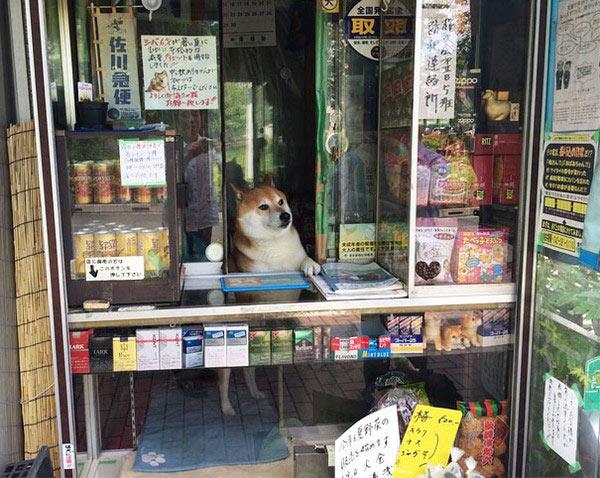 9-chu-cho-ban-hang-2-7397-1407122509.jpg