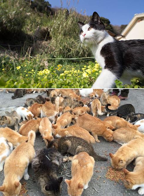 Không phải con người mà chính mèo mới là chủ của hòn đảo Tashirojima