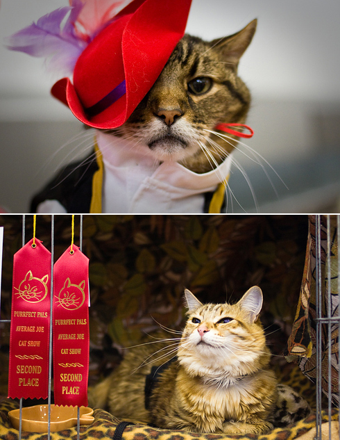 [Caption] Average Joe Cat Show, Arlington, Washington