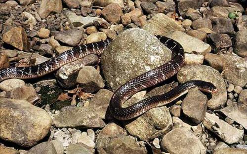 snake-5045-1408676555.jpg
