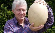 Đấu giá quả trứng hơn 500 tuổi