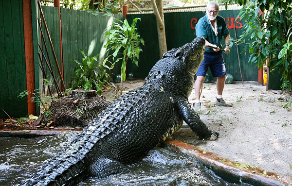 George Craig, 84, from Green Island, Australia, captured dangerous crocodile Cassius - who is 18ft-long and weighs a tonne - 30 years ago, and the pair have lived together ever since. As a young man George spent 17 years hunting fierce and dangerous crocodiles, and relocating them to a safe enclosure, where they weren't a threat to humans.    Read more: http://www.dailymail.co.uk/travel/travel_news/article-2747806/Real-life-Crocodile-Dundee-84-year-old-Australian-hunter-lives-largest-captive-croc-world-admits-reptile-eat-given-chance.html#ixzz3CtoG0gOI  Follow us: @MailOnline on Twitter | DailyMail on Facebook