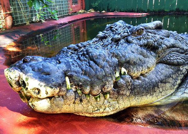 croc4-9092-1410338109.jpg