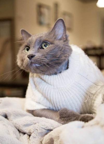 cat5-9107-1410410449.jpg