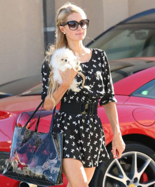 Paris Hilton cưng chiều chú chó mới như hoàng tử bé