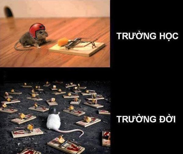 7-truong-doi-3072-1411098249.jpg