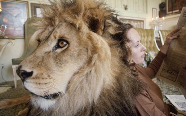 lion2-1201-1412917372.jpg