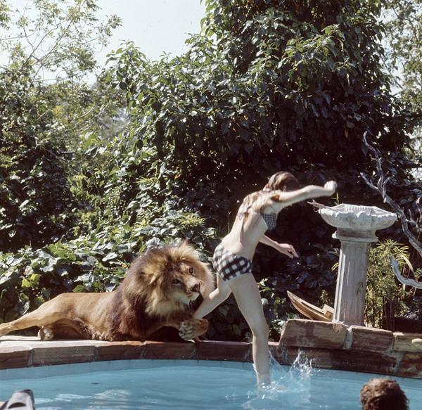 lion4-9870-1412917372.jpg