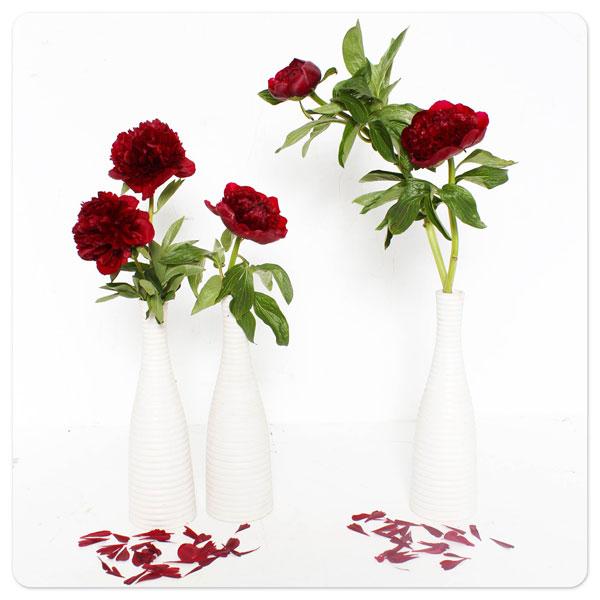 Vài tháng trở lại đây, cửa hàng áp dụng phương thức đặt hoa onlinewww.38degreeflowers.comcho những khách ở tỉnh xa, bao gồm Nha Trang, Cần Thơ, Vũng Tàu, Hải Phòng, và Đà Nẵng. Chất lượng hoa và mẫu thiết kế của các tỉnh xa cũng được bảo đảm như khi tại thành phố Hồ Chí Minh và Hà Nội.