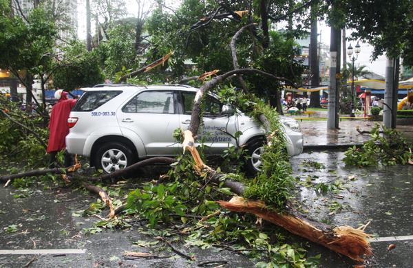 hoảng 14h 30, cơn mưa lớn kèm theo giông mạnh lướt qua nhiều quận trung tâm TP HCM. Một nhánh cổ thụ bị tét đè bẹp nóc ôtô 7 chỗ trên đường Hùng Vương, đoạn gần vòng xoay Lý Thái Tổ (quận 5). Không có thương vong nhưng tuyến đường bị phong tỏa.