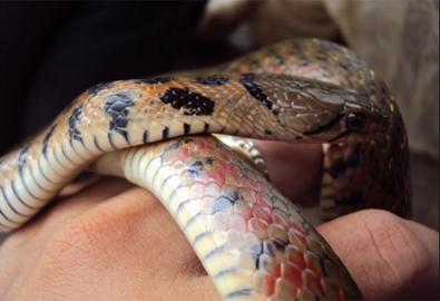 Con rắn 'oan hồn' ở phiên tòa em chết trong đám cưới chị
