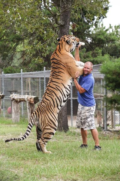 Làm bạn với hổ và sư tử đùa giỡn với tính mạng